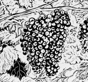 Fruit-of-the-vine
