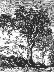 Polodore-oak