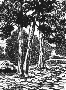 Swan-Point-Cedars